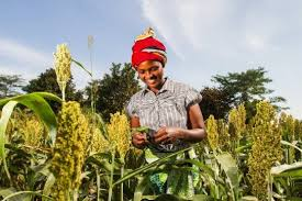 Expanding Smallholder Farmer's role in the Market Agriculture